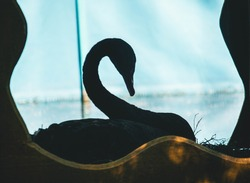 The outline of a black swan that rests in a house
