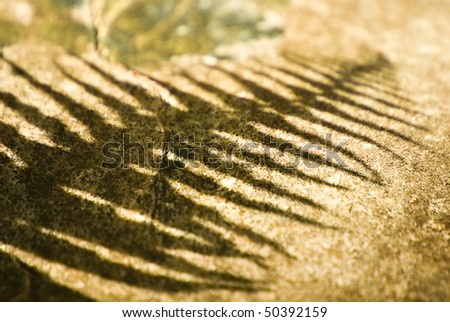 The outline shadow of a fern of a rough textured rock