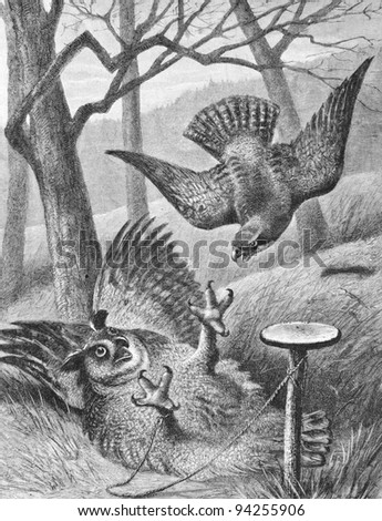 The owl and the peregrine falcon. Engraving by Koezeberg from picture by painter Vastag. Published in magazine 'Niva', publishing house A.F. Marx, St. Petersburg, Russia, 1893 Stock fotó ©