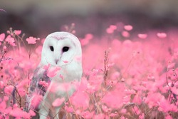 The owl is sitting among the flowers.