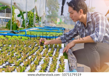 The owner of the hydroponics vegetable garden is checking the quality of the vegetable seedlings for planting in the next step.