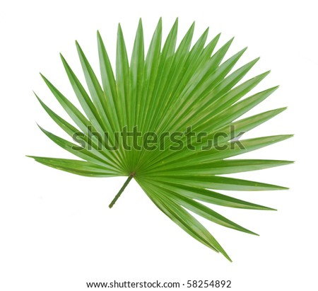 the palm foliage