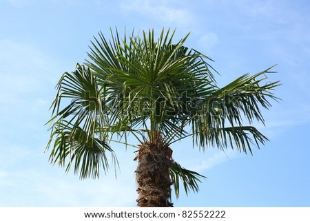 The palm-frond of a coconut tree, with blue sky
