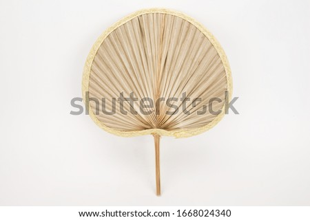 The palm of vasantonia, also known as desert fan palm, California fan palm and petticoat palm. A sunflower fan made of green fan-shaped leaves of tropical plants, popular in Asia