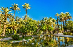 The Palmeral of Elche, Spain, one of the largest palm groves in the world. UNESCO heritage site