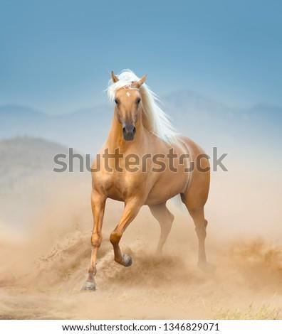 The palomino andalusian horse running in desert #1346829071