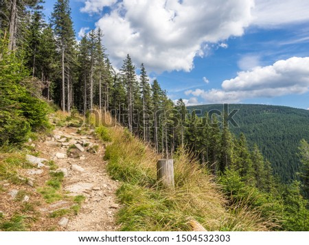 The panorama view of the pine forest on the hiking trail in national park Jeseniky Mountains, (Hrubý Jeseník). Czech Republic. #1504532303