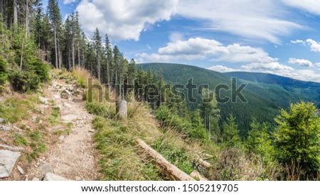 The panorama view of the pine forest on the hiking trail in national park Jeseniky Mountains, (Hrubý Jeseník). Czech Republic. #1505219705
