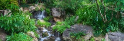 The panoramic view of small waterfall which runs and hitting rocks with lots of subtropical plants and ferns in Brisbane Botanical Garden  Mt Coot-tha, Australia