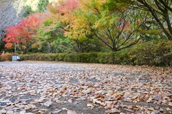 The parking lot of the nibukawa valley in November. A lot of dead leaves have fallen. Imabari City, Ehime Prefecture.
