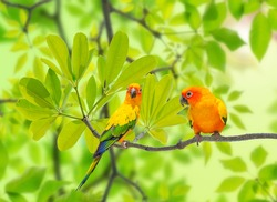 The parrot on branch on nature background