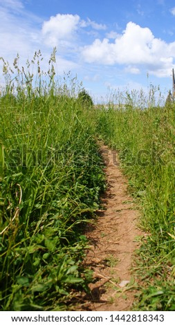 The path among the tall grass #1442818343