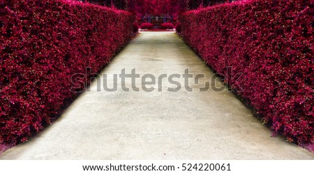 The path in the pink garden design.