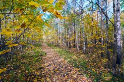 The path strewn with yellow leaves autumn forest .