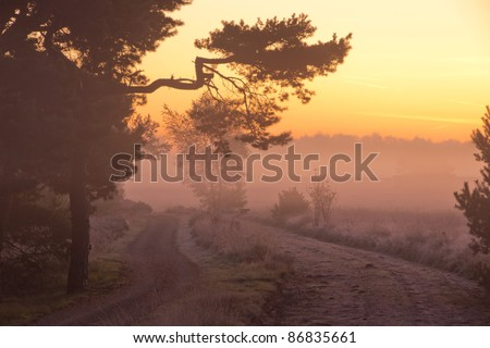 The path under the tree - stock photo