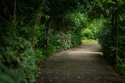 The pathway in the garden in Bangkok, selective focus.
