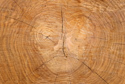 The pattern of the texture on the cut of the tree trunk (common ash) resembles the ominous face of a man