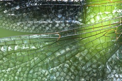 The pattern on the wing of a dragonfly