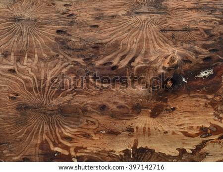 the pattern on the wood from beetle bark beetle