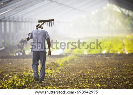 The peasants carried the hoe through the farmland #698942995