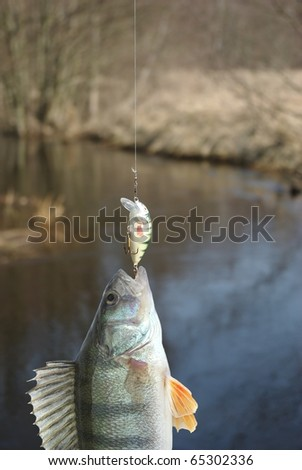 the perch on fishing-rod on background of water