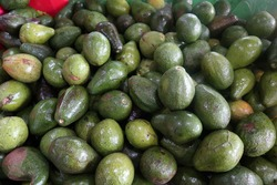 The Persea Americana mill. Avocado fruit is oval in shape. Yellow green skin color. Avocado fruit has one seed, and the texture of the flesh is soft when the fruit is ripe.