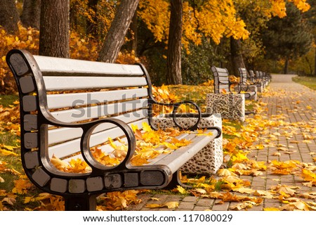 The perspective of the row of benches in autumn park while fall