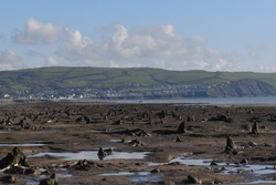 the petrified forest reviled a few years ago on Borth beach, fossilised tree stumps poking out of the beach where an ancient forest used to be