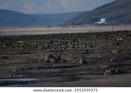 the petrified forest reviled a few years ago on Borth beach, fossilised tree stumps poking out of the beach where an ancient forest used to be Stockfoto ©