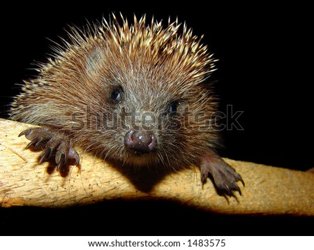 The photo of the pretty hedgehog. flash light