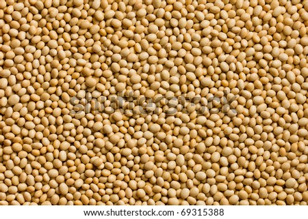 the photo shot of soya beans background