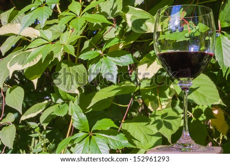 The photo shows the wild grape and the glass of red wine.
