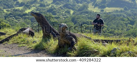 Постер, плакат: The photographers and Komodo, холст на подрамнике