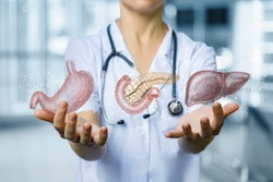 The physician shows the internal organs of digestion of a person on the blurred background.