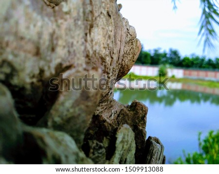The pic is of an tree with a pond & blue sky with a view of city.