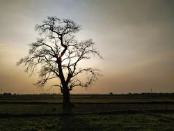 The picture of a leafless tree against the sun before sunset