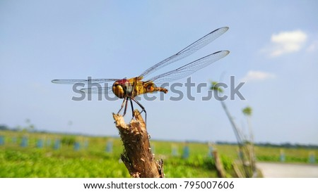 The picture of a vary beautiful dragonfly(grasshopper).The colors on dragonfly were very beautiful.The environment was very modest.