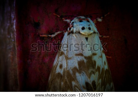 the picture of cute moth, it's a night butterfly with the red dark background