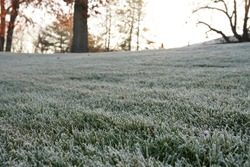 The picture of frosty lawn in the winter morning.