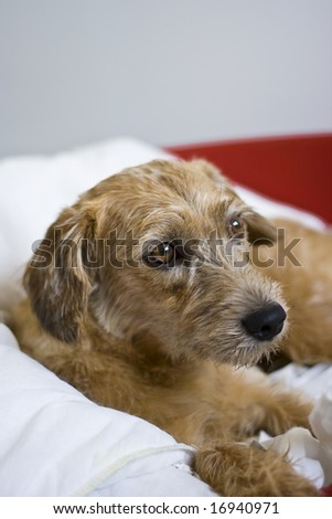 The picture of resting dog