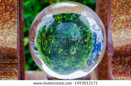 The picture of the inverted tree, which was taken through a large crystal ball