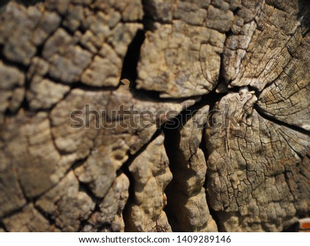 The picture of wood texture. #1409289146