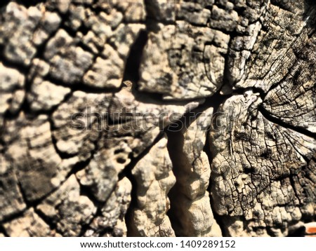 The picture of wood texture. #1409289152