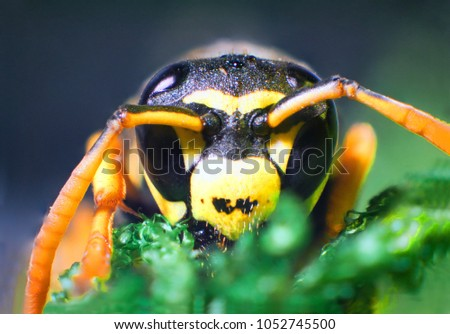 The picture shows Hornet Vespa crabro isolated on colorful background