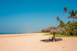The picturesque beach of Srilanka. Waves of palm trees and sand. Coast of the indian ocean