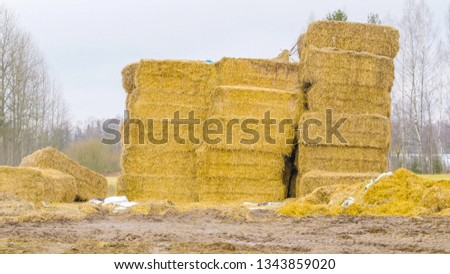 The piles of hays in the ground they are in big squares on piled up