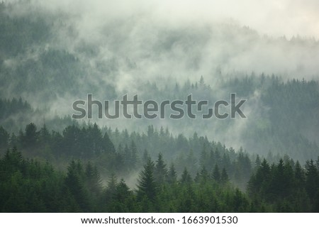 The pine forest in the valley in the foggy morning Fresh atmosphere of green. Stockfoto ©