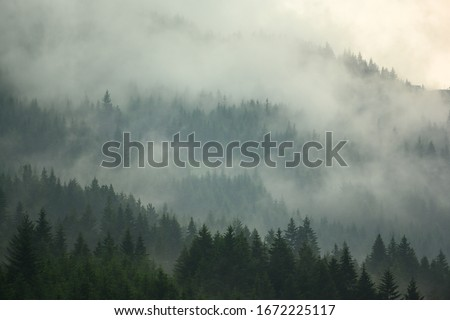 The pine forest in the valley in the morning is very foggy, the atmosphere looks scary. Dark tone and vintage image. Сток-фото ©