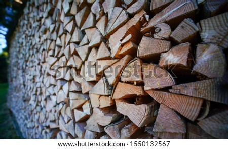 The pine trees that are cut in an orderly order