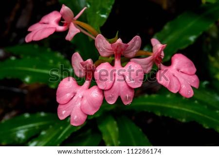 The Photo Of Flowers Weigela Weigela Praecox Ez Canvas